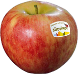 Elstar apple